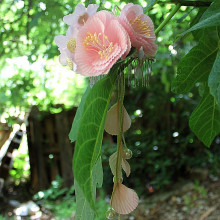 Broche à cheveux fait main - Fleurs roses et perles