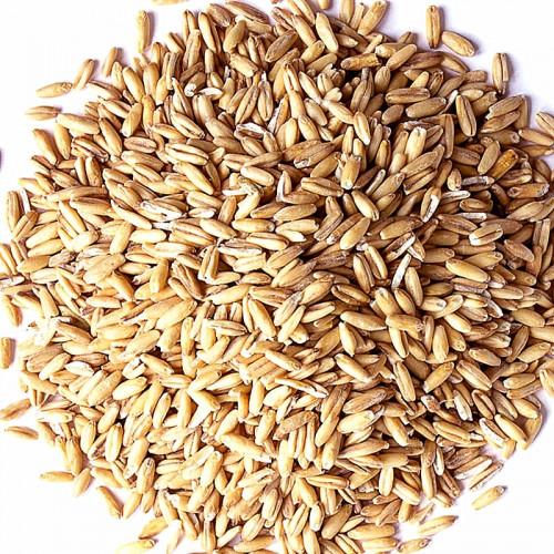 Carvi en grain Bio-Asian Market-100g